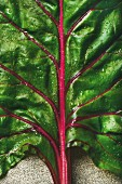 Close-up of fresh swiss chard leaves with a red stem