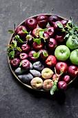 Summer Fruits against a dark background