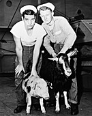 Test animals after 1946 atomic bomb test
