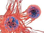 Cancer cell, illustration