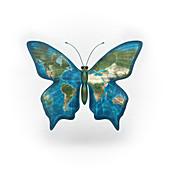 Butterfly with world map on its wings, illustration