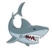 Angry shark, illustration