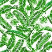 Palm tree leaves, illustration