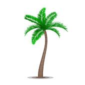 Tropical palm tree, illustration