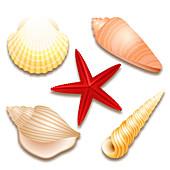 Seashells and starfish, illustration