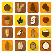 Nuts, illustration