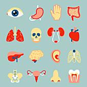 Human organ icons, illustration