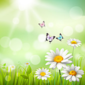 Daisies and butterflies, illustration