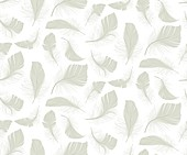 Feather icons, illustration