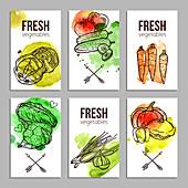 Vegetables, illustration