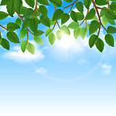 Blue sky and tree branches, illustration