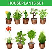 Houseplant icons, illustration