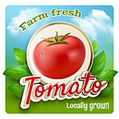 Tomato, illustration