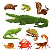 Reptiles and amphibians, illustration