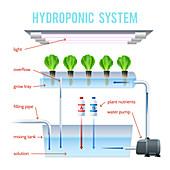 Hydroponics, illustration