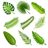 Leaves, illustration
