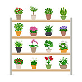 Houseplants, illustration