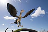 Archaeopteryx dinosaur, illustration