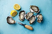 Open Oysters, lemon and knife on blue background