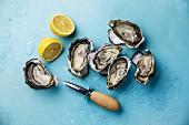 Geöffnete Austern mit Zitronen und Austernmesser auf blauem Untergrund