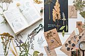 Getrocknete und gepresste Pflanzen, botanisches Buch und Stempeldruck