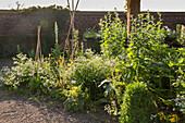 Klostergarten mit Kräuterpflanzen (Kamp-Lintfort, Deutschland)