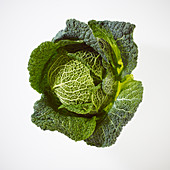 A savoy cabbage on a white background