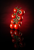 Tomatoes on a vine against a black and red background