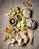 Various fresh mushrooms (button, portobello, shimeji, shiitake, oyster and enoki)