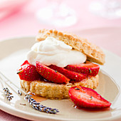 Strawberry shortcake with lavender and cream (USA)