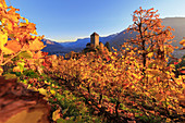 A view of Tirolo castle at sunset, Merano, Vinschgau, South Tyrol, Italy