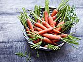 Frische Karotten im Korb