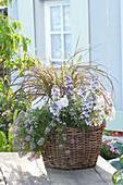 Korb bepflanzt mit Angelonia Angelface 'Wedgewood Blue' ( Engelsgesicht )