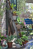 Korbkästen mit Gemüse und Balkonblumen an alte Holzleiter gehängt