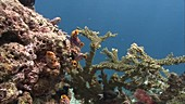 Corals and fish on a reef