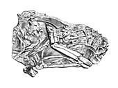 Mammal bone fossils, illustration