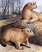 Ceratogaulus, illustration