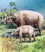 Uintatherium, illustration