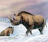 Woolly rhinoceros, illustration