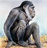Sivapithecus, illustration