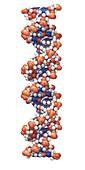 DNA molecular structure, illustration