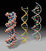 DNA models, illustration