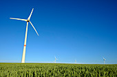 Wind turbines and cereal crop