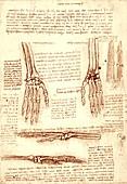 Hand and wrist bones, illustration