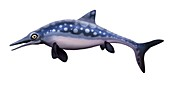 Ophthalmosaurus marine reptile, illustration