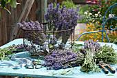 Frisch geschnittene Blüten von  Lavendel  zum Trocknen