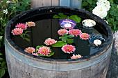 Schwimmende Blüten von Dahlien und Glasschalen mit Kerzen