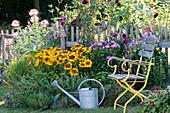 Beet mit Kräutern und Sommerblumen am Zaun : Rudbeckia hirta