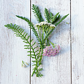 Yarrow with flowers