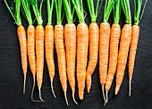 Frische Karotten aufgereiht vor schwarzem Hintergrund